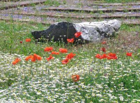 Ruderi e piante: il bello del Palatino