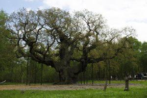 A rischio la foresta di Sherwood