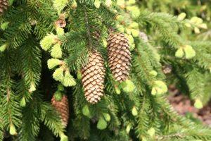 L'albero di Natale? Mangiamolo!