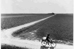 Terra senz'ombra. Il Delta del Po negli anni Cinquanta
