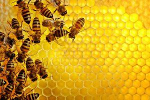 A Carditello le api sentinelle dell'ambiente