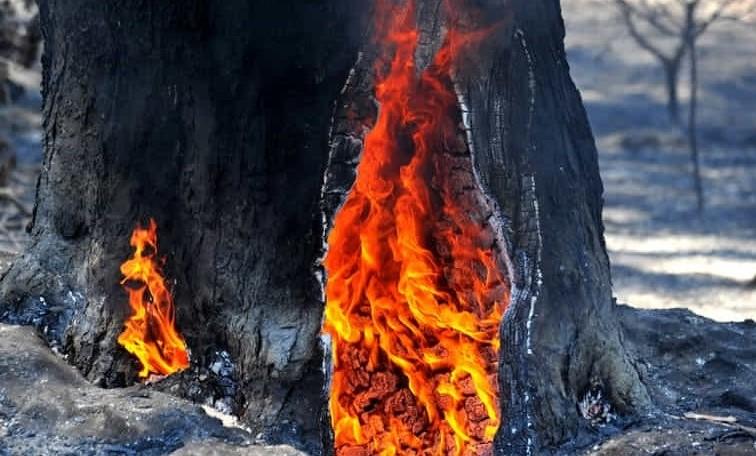 Castelfusano-ri-Messa-a-fuoco