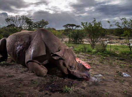 Wildlife Photographer of the Year 2017: vince lo strazio