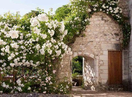 Chateau du Rivau – Il tempo delle rose