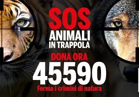 SOS animali in trappola