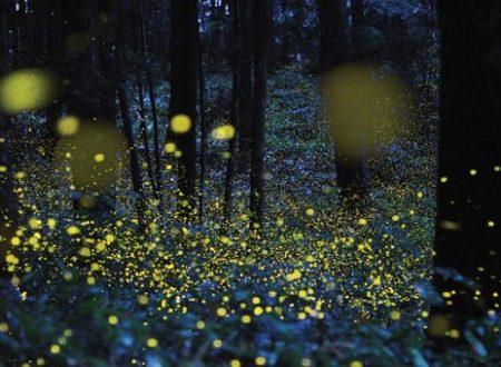 Celebrare le lucciole: il World Firefly Day, 7 e 8 luglio