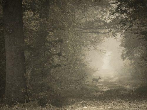 Le più belle foreste d'Italia in concorso