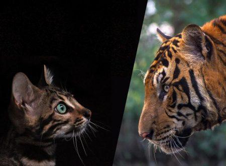 Tiger Day 2018: è il 29 luglio