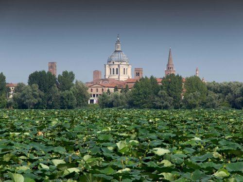 A Mantova il World Forum on Urban Forests