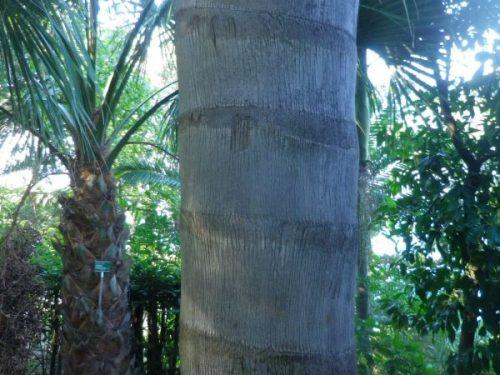 Il Giardino delle Palme a Gaeta, mito e passione
